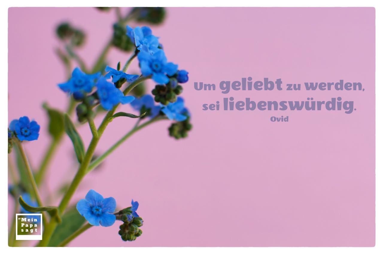 Kleine blaue Blüten mit Ovid Zitate Bilder: Um geliebt zu werden, sei liebenswürdig. Ovid