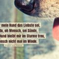 Beitragsbild - Dass mir mein Hund das Liebste sei, sagst du, oh Mensch, sei Sünde