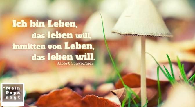 Ich bin Leben, das leben will, inmitten von Leben, das leben will – Albert Schweitzer
