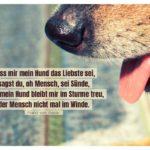 Hundeschnauze mit von Assisi Zitate Bilder: Dass mir mein Hund das Liebste sei, sagst du, oh Mensch, sei Sünde, doch mein Hund bleibt mir im Sturme treu, der Mensch nicht mal im Winde. Franz von Assisi