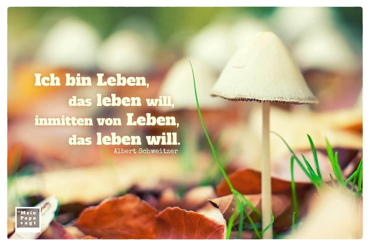 Pilze im Herbstlaub mit Schweitzer Zitate Bilder: Ich bin Leben, das leben will, inmitten von Leben, das leben will. Albert Schweitzer