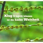 Blätter Farn mit Bacon Zitate Bilder: Klug fragen können ist die halbe Weisheit. Francis Bacon