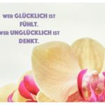 Orchidee mit Sprüche Bilder: Wer glücklich ist fühlt. Wer unglücklich ist denkt.