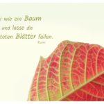 Herbstlaub mit Rumi Zitate Bilder: Sei wie ein Baum und lasse die toten Blätter fallen. Rumi