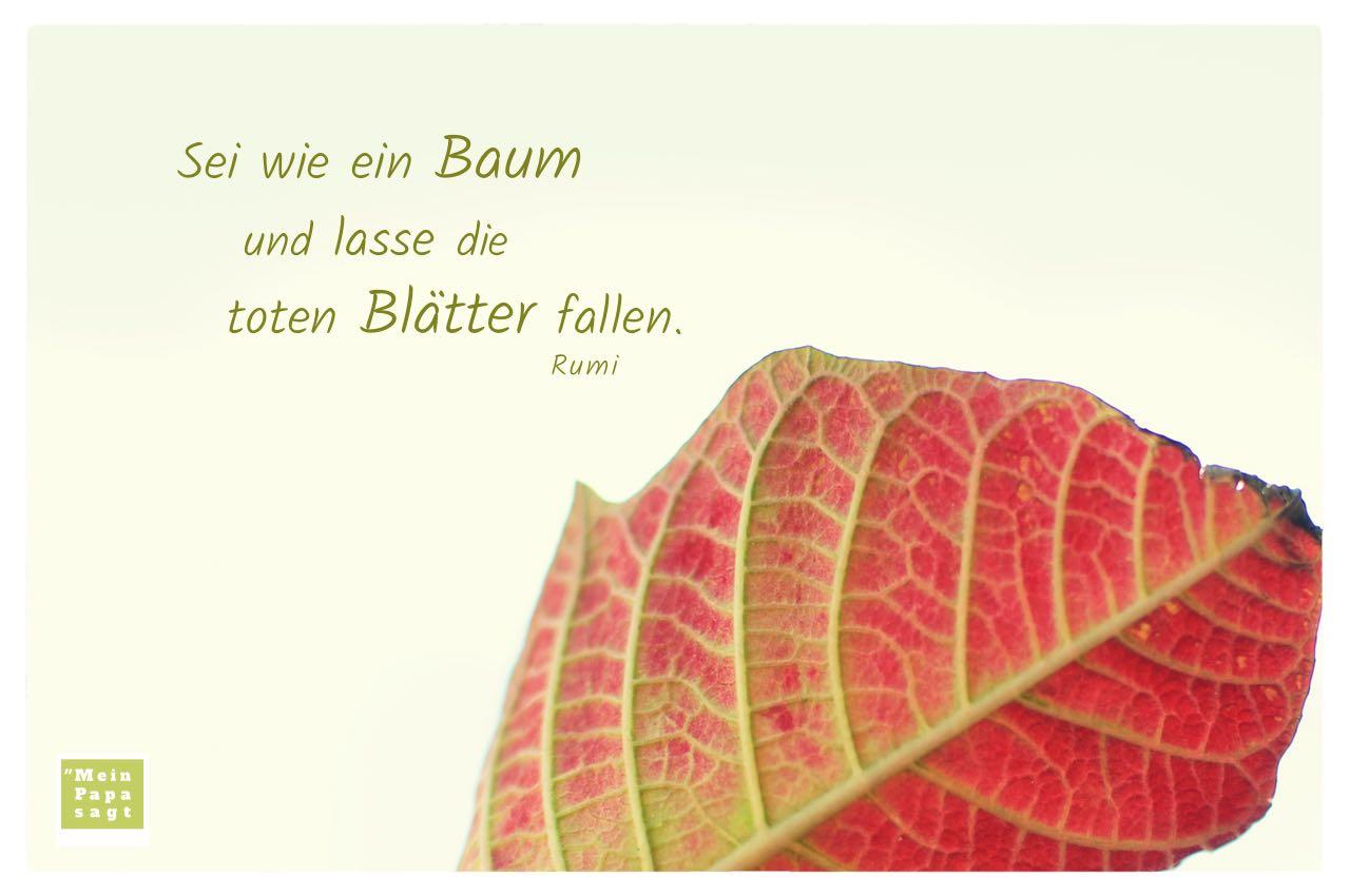 Herbstlaub mit Mein Papa sagt Rumi Zitate Bilder: Sei wie ein Baum und lasse die toten Blätter fallen. Rumi
