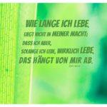 Grünes Blatt mit Seneca Zitate Bilder: Wie lange ich lebe, liegt nicht in meiner Macht; dass ich aber, solange ich lebe, wirklich lebe, das hängt von mir ab. Seneca