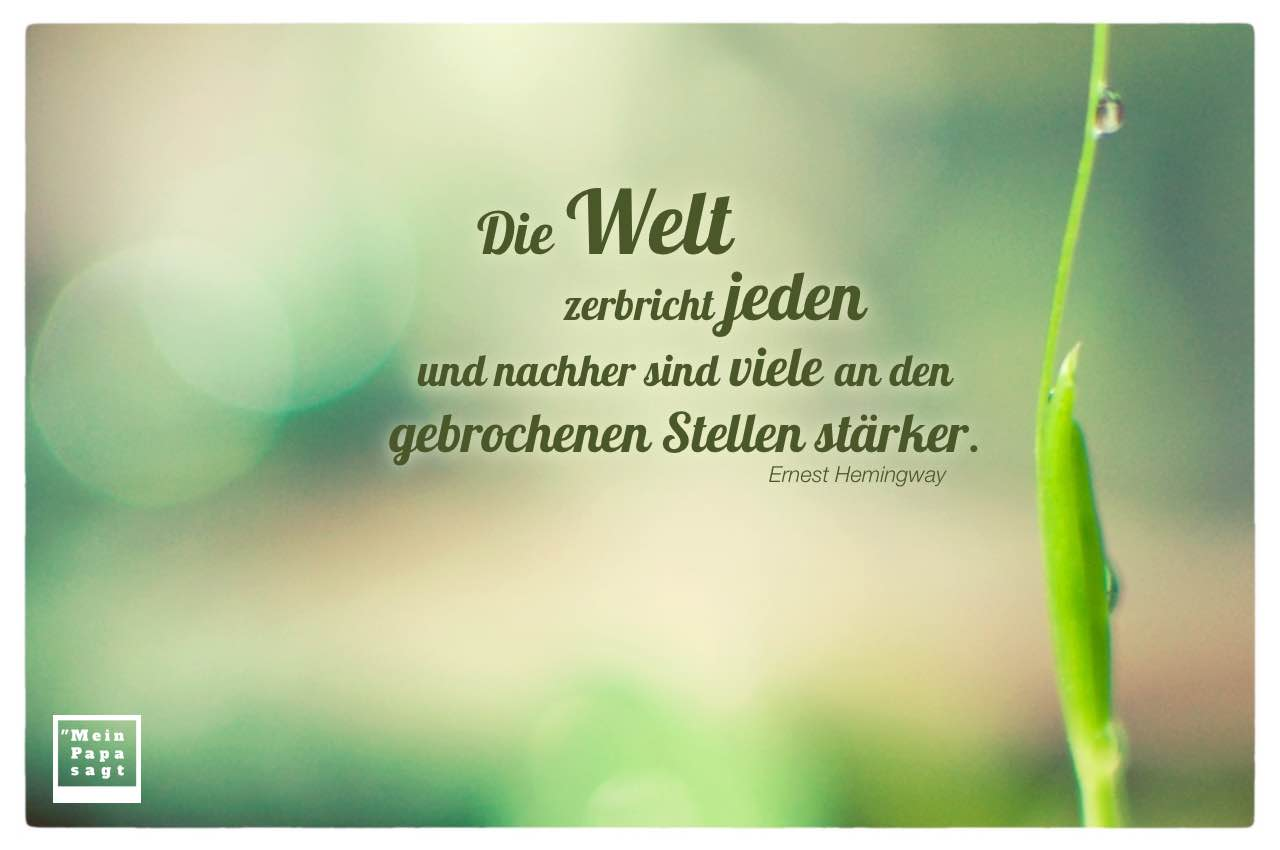 Pflanze mit Tropfen und Bokeh Hintergrund mit Hemingway Zitate Bilder: Die Welt zerbricht jeden und nachher sind viele an den gebrochenen Stellen stärker. Ernest Hemingway