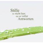 Palmenblatt mit Regentropfen und Sprüche Bilder: Stille ist nicht leer, sie ist voller Antworten.