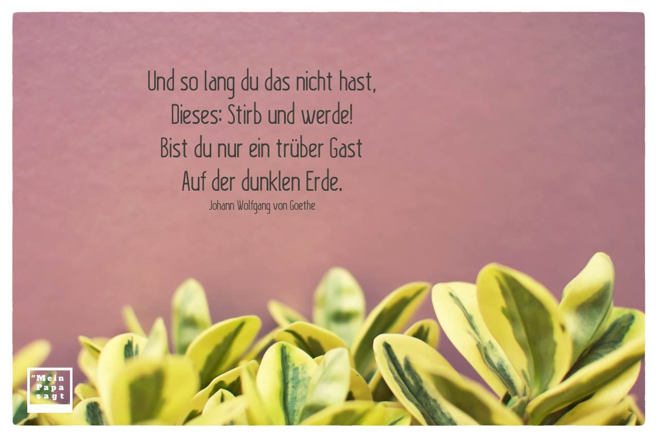 Blätter Pflanzen mit Goethe Zitate Bilder: Und so lang du das nicht hast, Dieses: Stirb und werde! Bist du nur ein trüber Gast Auf der dunklen Erde. Johann Wolfgang von Goethe