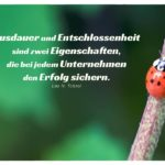 Marienkäfer auf Zweig mit Tolstoi Zitate Bilder: Ausdauer und Entschlossenheit sind zwei Eigenschaften, die bei jedem Unternehmen den Erfolg sichern. Leo N. Tolstoi