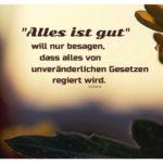 Pflanzen vor Abendhimmel mit Voltaire Zitate Bilder: 'Alles ist gut' will nur besagen, dass alles von unveränderlichen Gesetzen regiert wird. Voltaire