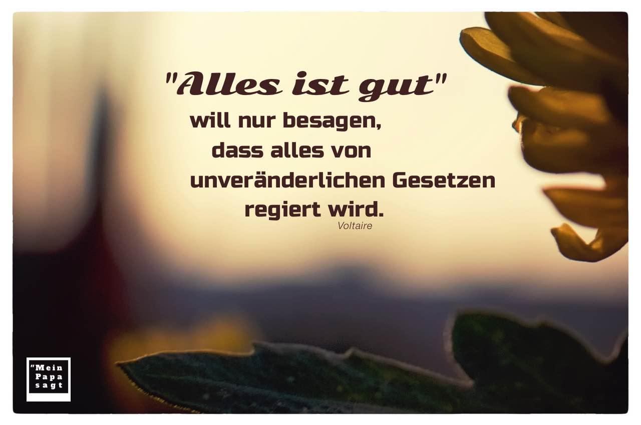 Pflanzen vor Abendhimmel mit Mein Papa sagt Voltaire Zitate Bilder: 'Alles ist gut' will nur besagen, dass alles von unveränderlichen Gesetzen regiert wird. Voltaire