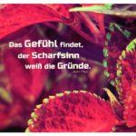 Pflanzenblätter mit Paul Zitate Bilder: Das Gefühl findet, der Scharfsinn weiß die Gründe. Jean Paul