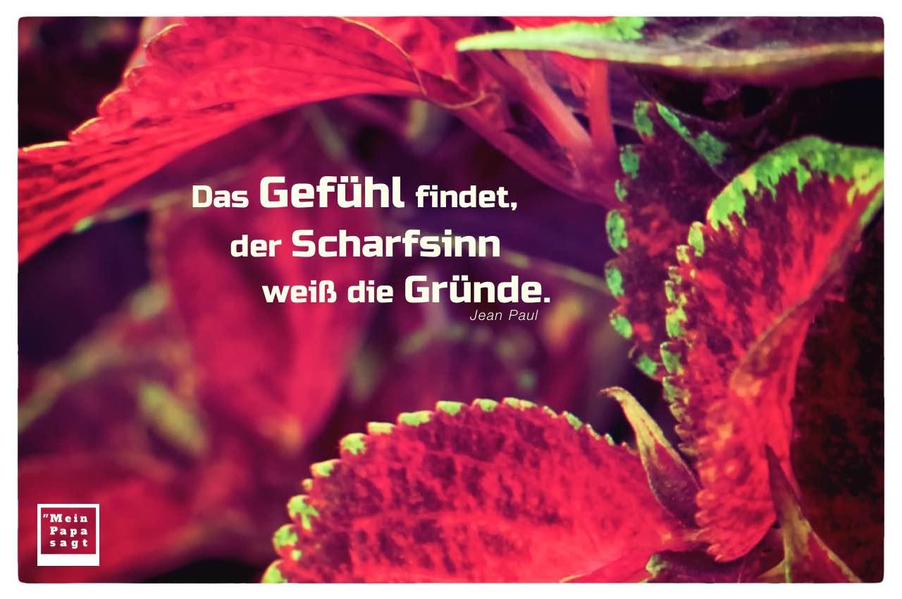 Pflanzenblätter mit Mein Papa sagt Jean Paul Zitate Bilder: Das Gefühl findet, der Scharfsinn weiß die Gründe. Jean Paul