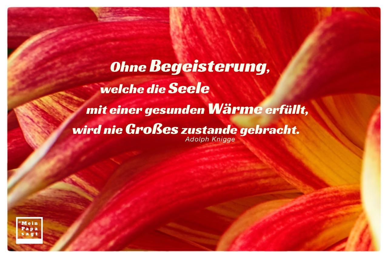 Blütenkelch mit Knigge Zitate Bilder: Ohne Begeisterung, welche die Seele mit einer gesunden Wärme erfüllt, wird nie Großes zustande gebracht. Adolph Knigge