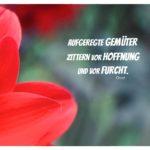Blütenblätter vor dunklem Hintergrund mit Ovid Zitate mit Bild: Aufgeregte Gemüter zittern vor Hoffnung und vor Furcht. Ovid