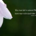 Was man tief in seinem Herzen besitzt, kann man nicht durch den Tod verlieren - Johann Wolfgang von Goethe