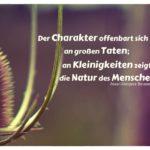 Pflanze Dornen mit Rousseau Zitate mit Bild: Der Charakter offenbart sich nicht an großen Taten; an Kleinigkeiten zeigt sich die Natur des Menschen. Jean-Jacques Rousseau