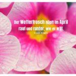 Regentropfen auf Blüten mit Klages Zitate mit Bild: Der Wetterfrosch hüpft im April rauf und runter, wie er will. Klaus Klages