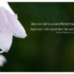 Blütenkelch mit Goethe Zitate Bilder: Was man tief in seinem Herzen besitzt, kann man nicht durch den Tod verlieren. Johann Wolfgang von Goethe