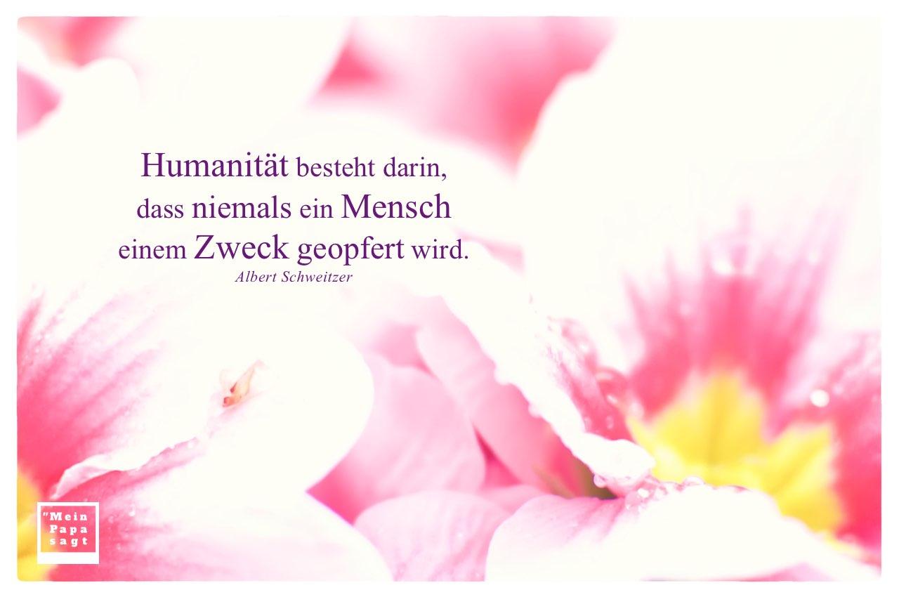 Astern mit Schweitzer Zitate mit Bild: Humanität besteht darin, dass niemals ein Mensch einem Zweck geopfert wird. Albert Schweitzer