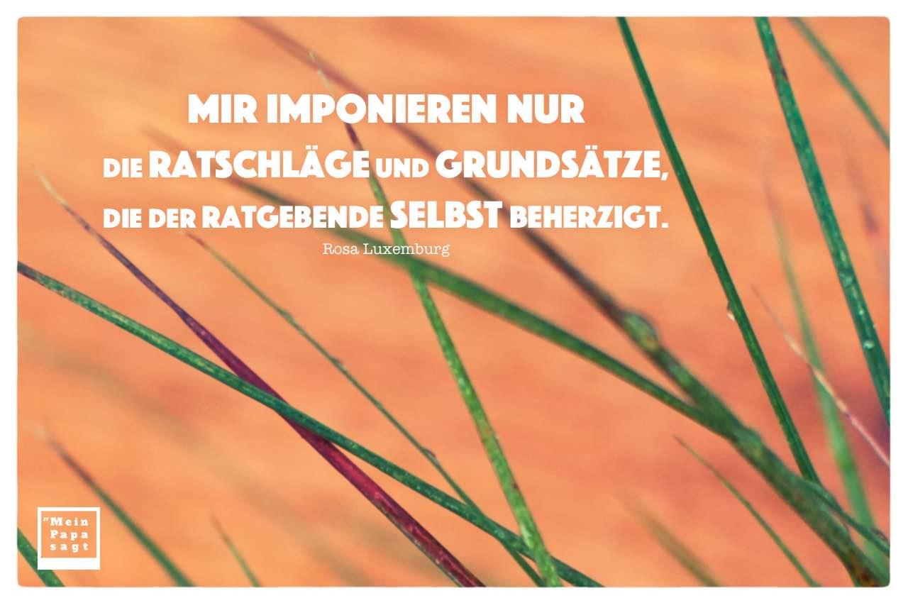 Gräser vor Holz mit Luxemburg Zitate mit Bild: Mir imponieren nur die Ratschläge und Grundsätze, die der Ratgebende selbst beherzigt. Rosa Luxemburg