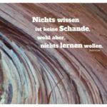 geborstenes Holz mit Sokrates Zitate mit Bild: Nichts wissen ist keine Schande, wohl aber, nichts lernen wollen. Sokrates