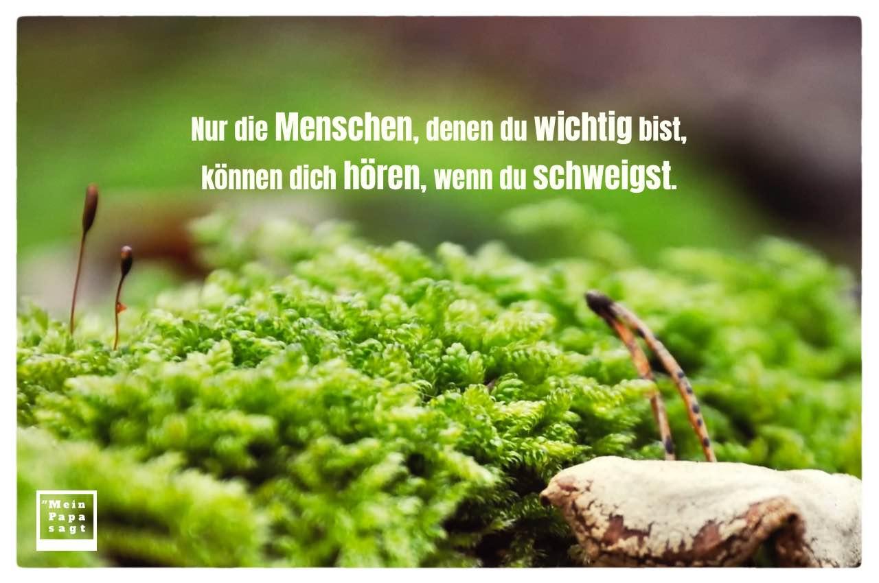 Moos im Wald mit Sprüche Bilder: Nur die Menschen, denen du wichtig bist, können dich hören, wenn du schweigst.