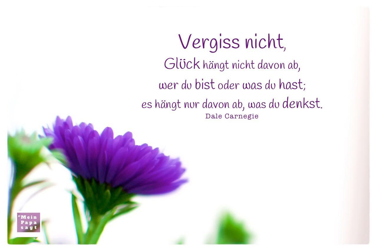 Aster mit Carnegie Zitate mit Bild: Vergiss nicht, Glück hängt nicht davon ab, wer du bist oder was du hast; es hängt nur davon ab, was du denkst. Dale Carnegie