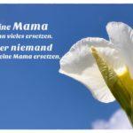 Blütenkelche vor blauem Himmel mit dem Muttertagsspruch mit Bild: Eine Mama kann vieles ersetzen. Aber niemand kann eine Mama ersetzen.
