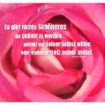 Rosa Rose mit Hugo Zitate mit Bild: Es gibt nichts Schöneres als geliebt zu werden, geliebt um seiner selbst willen oder vielmehr trotz seiner selbst. Victor Hugo