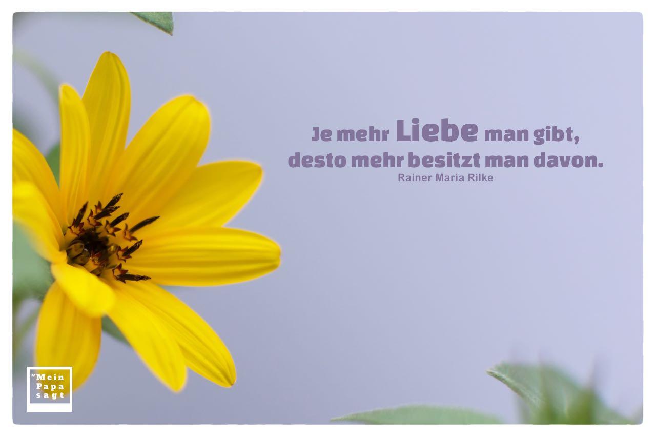 Blumenpracht mit Mein Papa sagt Rainer Maria Rilke Zitate mit Bild: Je mehr Liebe man gibt, desto mehr besitzt man davon. Rainer Maria Rilke