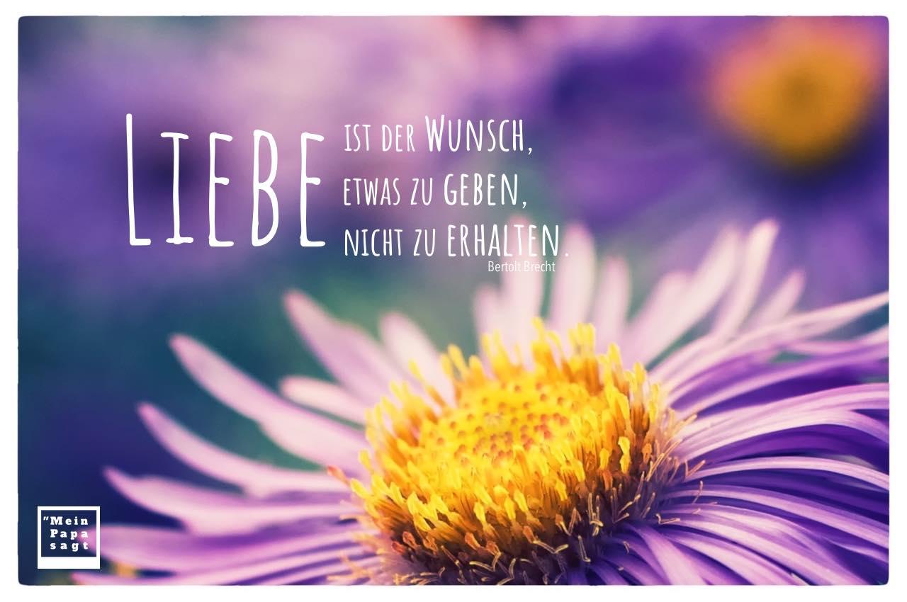Blüten mit Brecht Zitate mit Bild: Liebe ist der Wunsch, etwas zu geben, nicht zu erhalten. Bertolt Brecht