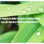 Tropfen auf Blättern mit Bacon Zitate mit Bild: Wir können die Natur nur dadurch beherrschen, dass wir uns ihren Gesetzen unterwerfen. Francis Bacon