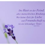 Lavendel mit Keller Zitate mit Bild: Die Hast ist der Feind aller menschlichen Bindungen. Wer keine Zeit für Liebe und Freundschaft hat, ist ein lebendiger Toter. Helen Keller