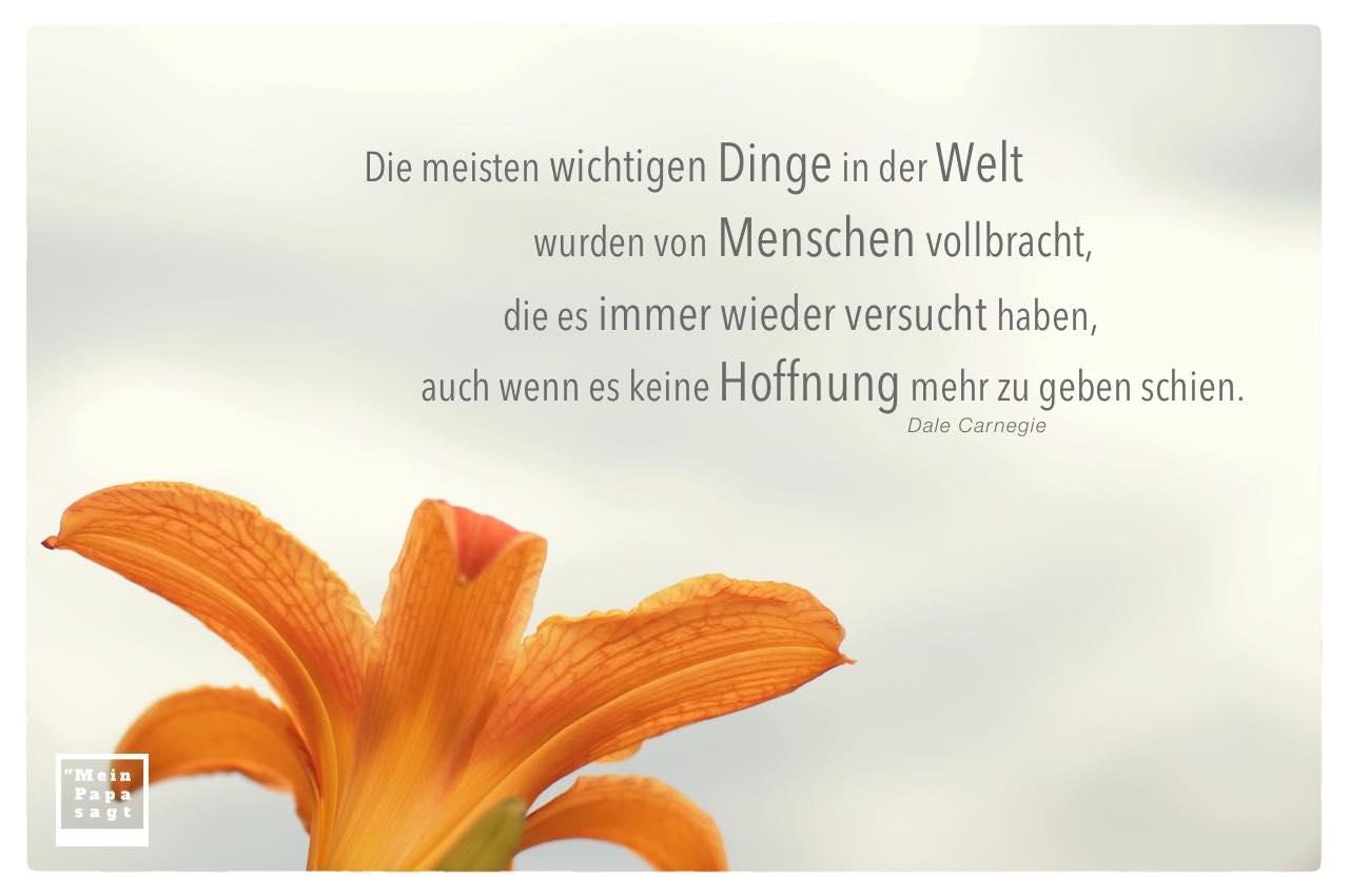 Lilie mit Carnegie Zitate mit Bild: Die meisten wichtigen Dinge in der Welt wurden von Menschen vollbracht, die es immer wieder versucht haben, auch wenn es keine Hoffnung mehr zu geben schien. Dale Carnegie