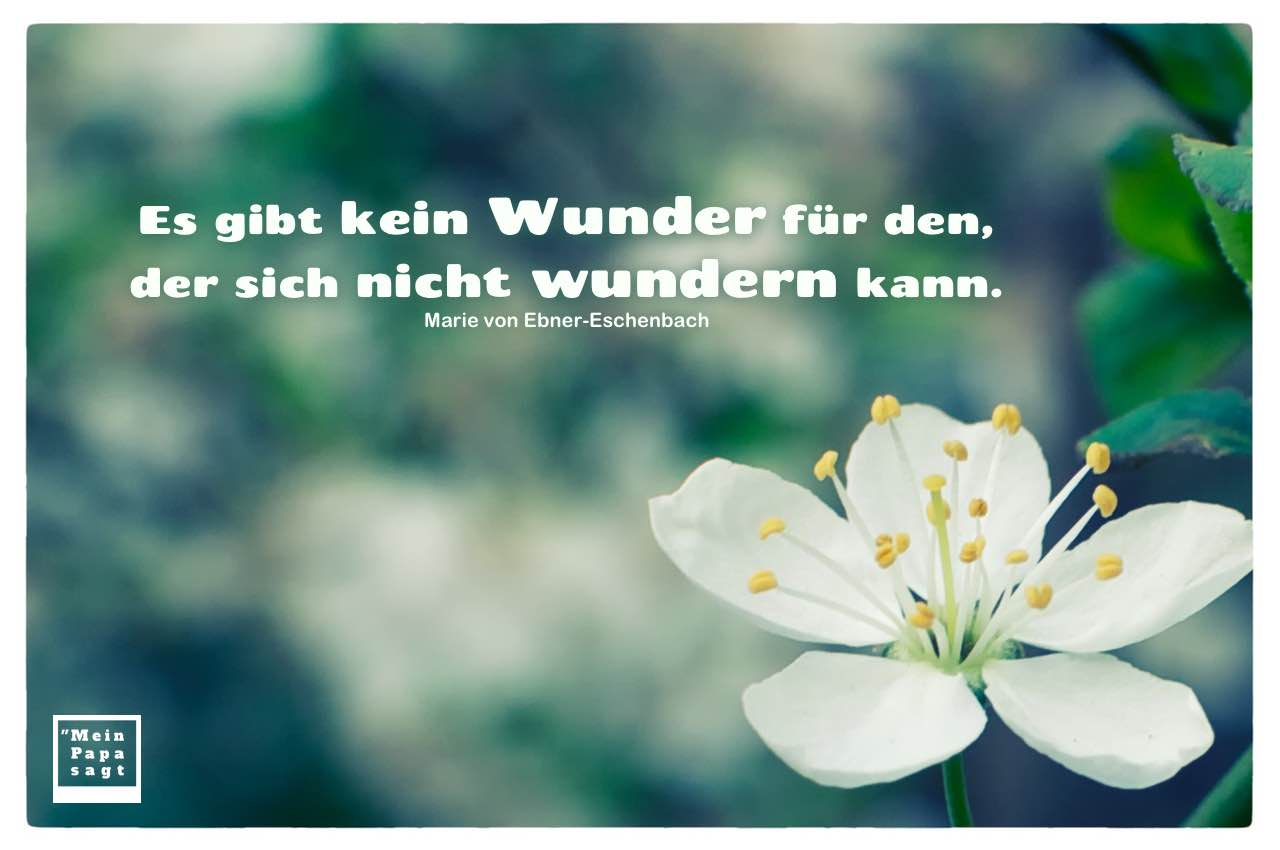Blüte mit Ebner-Eschenbach Zitate mit Bild: Es gibt kein Wunder für den, der sich nicht wundern kann. Marie von Ebner-Eschenbach