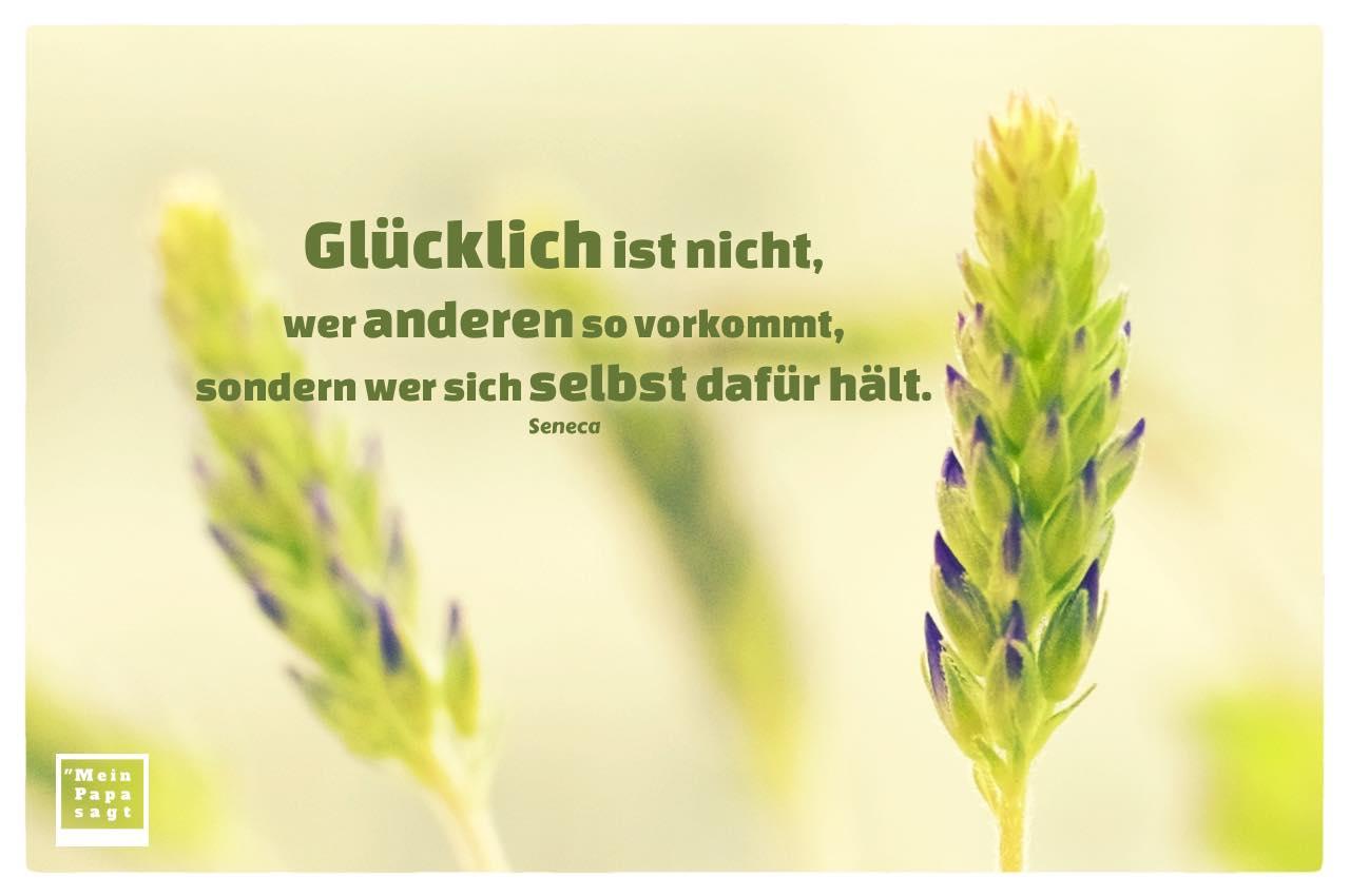 Lavendel mit Seneca Zitate mit Bild: Glücklich ist nicht, wer anderen so vorkommt, sondern wer sich selbst dafür hält. Seneca