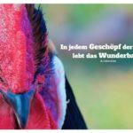 Hahn mit Aristoteles Zitate mit Bild: In jedem Geschöpf der Natur lebt das Wunderbare. Aristoteles