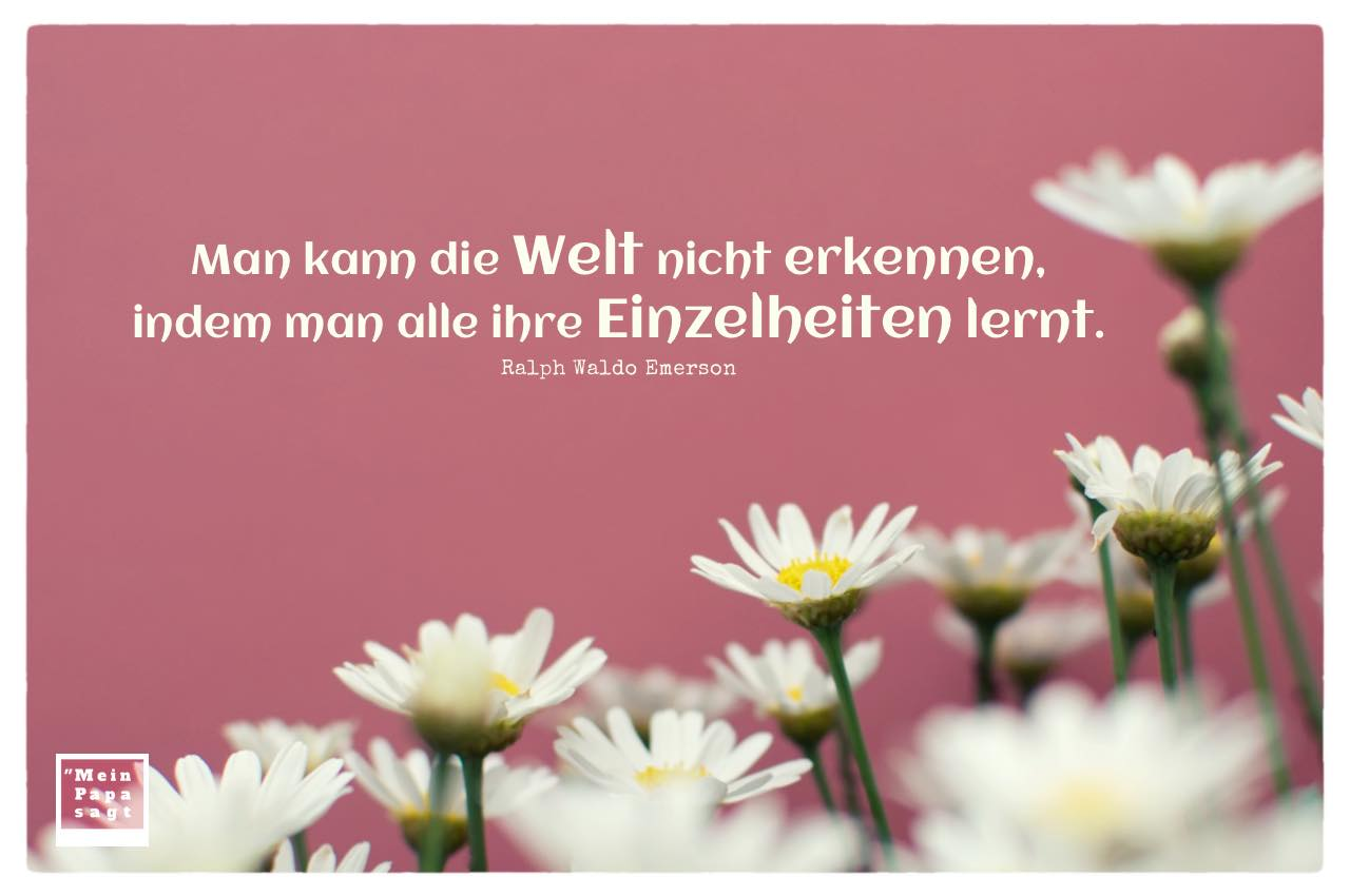 Gänseblümchen mit Emerson Zitate mit Bild: Man kann die Welt nicht erkennen, indem man alle ihre Einzelheiten lernt. Ralph Waldo Emerson