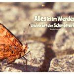 Schmetterling mit Sachs Zitate mit Bild: Alles ist im Werden, zwinkert der Schmetterling. Nelly Sachs