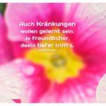 Stiefmütterchen mit Walser Zitate mit Bild: Auch Kränkungen wollen gelernt sein. Je freundlicher, desto tiefer trifft's. Martin Walser