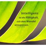 Fensterblatt mit Hawking Zitate mit Bild: Intelligenz ist die Fähigkeit, sich dem Wandel anzupassen. Stephen Hawking