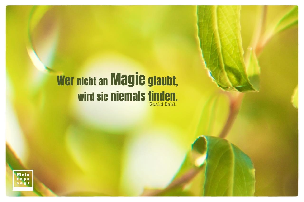Weiden-Blätter mit Dahl Zitate mit Bild: Wer nicht an Magie glaubt, wird sie niemals finden. Roald Dahl