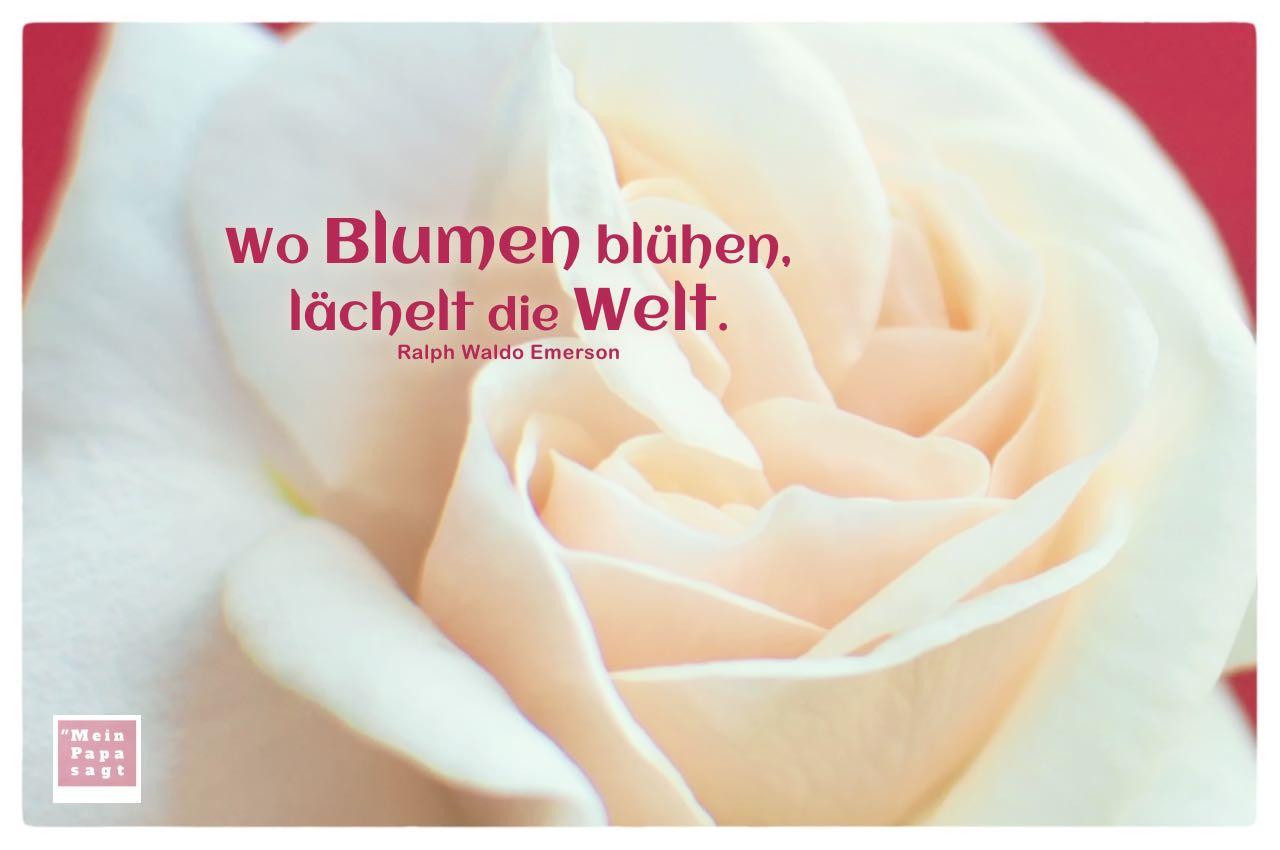 Rose mit Emerson Zitate mit Bild: Wo Blumen blühen, lächelt die Welt. Ralph Waldo Emerson