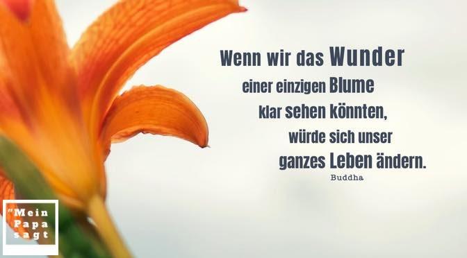 Wenn wir das Wunder einer einzigen Blume klar sehen könnten, würde sich unser ganzes Leben ändern – Buddha