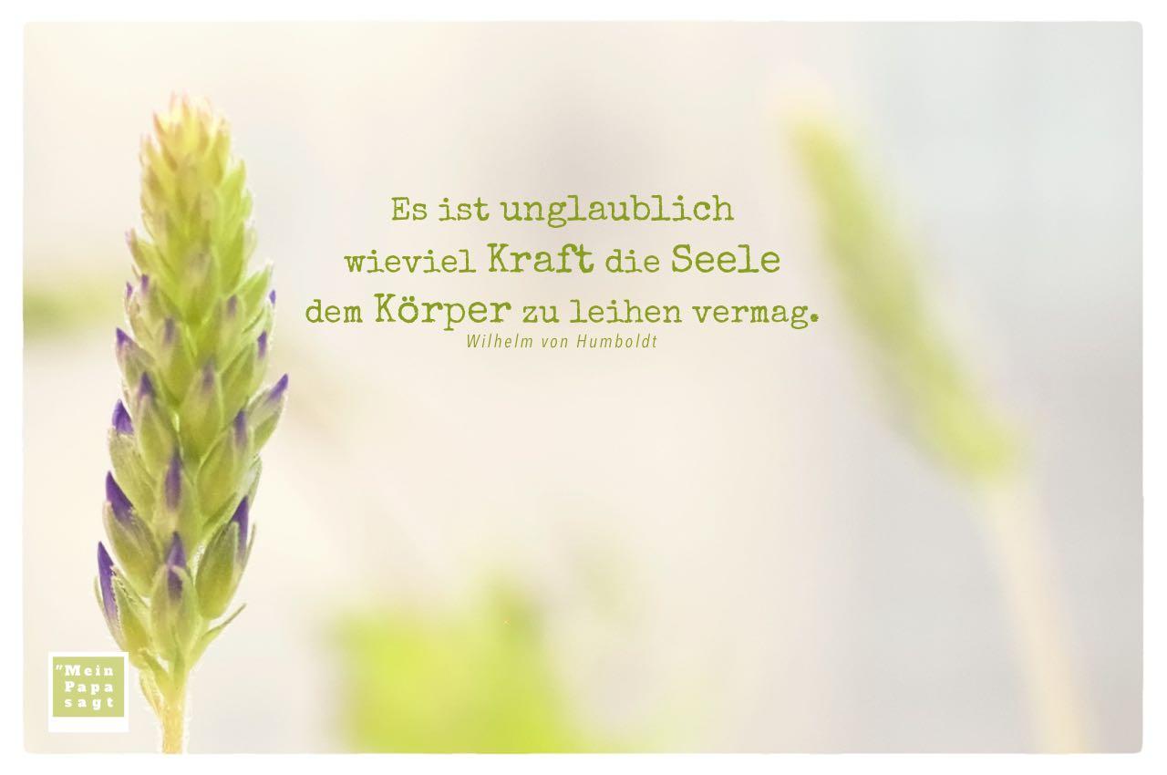 Lavendel mit Wilhelm von Humboldt Zitate mit Bild: Es ist unglaublich wieviel Kraft die Seele dem Körper zu leihen vermag. Wilhelm von Humboldt
