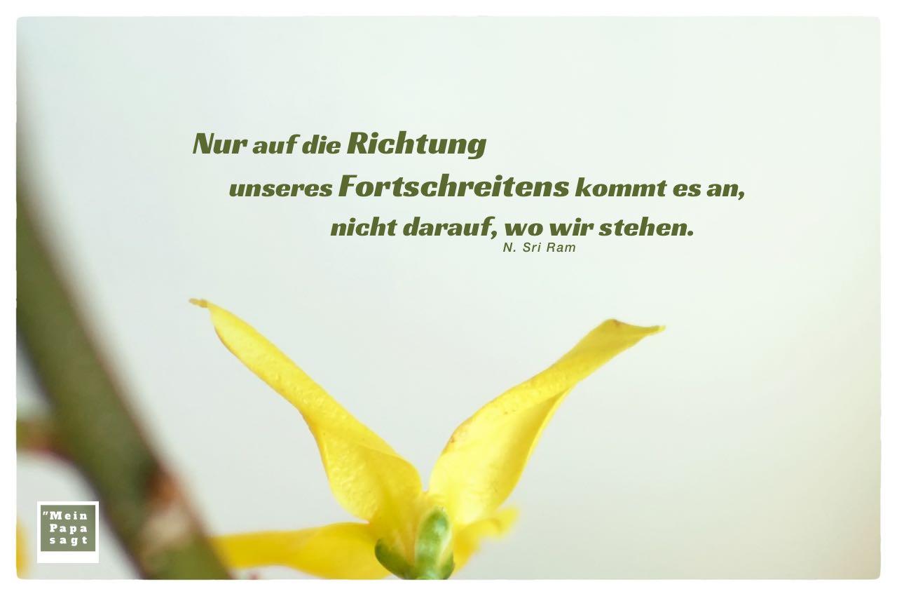 Forsythien mit N. Sri Ram Zitate mit Bild: Nur auf die Richtung unseres Fortschreitens kommt es an, nicht darauf, wo wir stehen. N. Sri Ram
