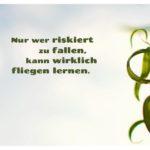 Weiden Zweig vor bewölktem Himmel mit Sprüche Bilder: Nur wer riskiert zu fallen, kann wirklich fliegen lernen.