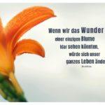 Lilie mit Buddha Zitate mit Bild: Wenn wir das Wunder einer einzigen Blume klar sehen könnten, würde sich unser ganzes Leben ändern. Buddha